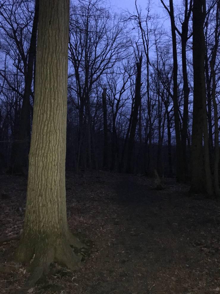 BrightwoodParkDarkMM.jpeg