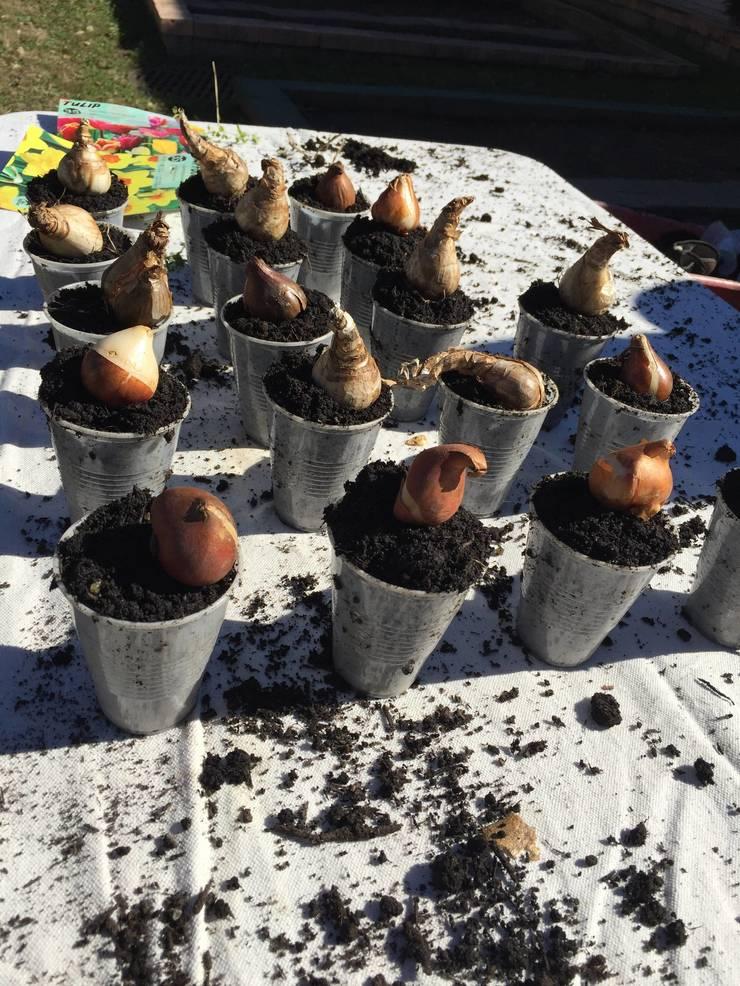 Bulbs in the Husky Garden.JPG