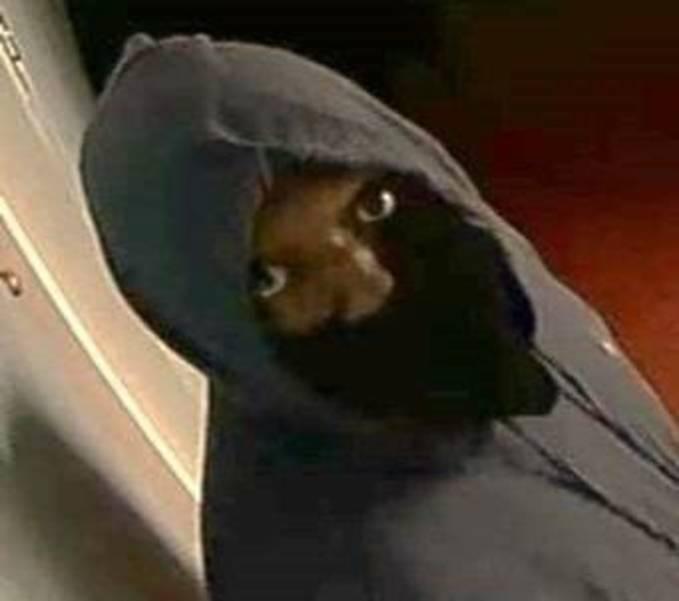 Burglary Suspect Plainfield.jpg