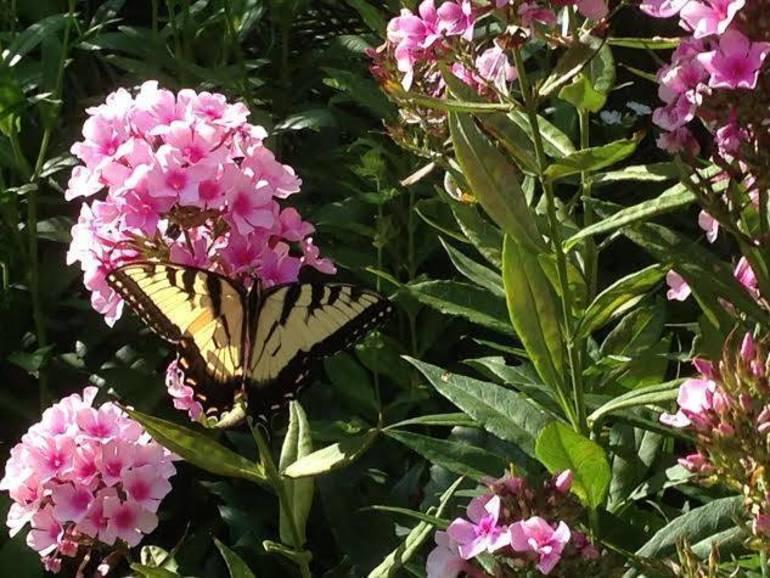 Butterfly at Buck Garden