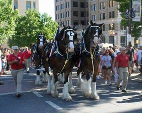 Carousel image 02885128c9cf505843df bud clydesdales
