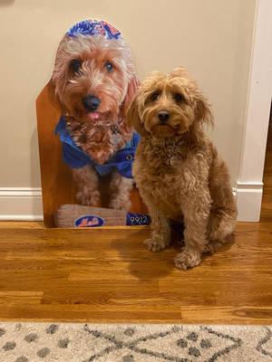 Boulevard Veterinary Clinic Pet of the Week: Chloe