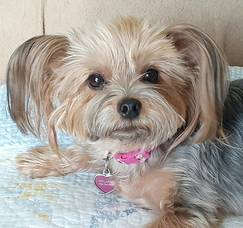 Boulevard Veterinary Clinic Pet of the Week: Coco