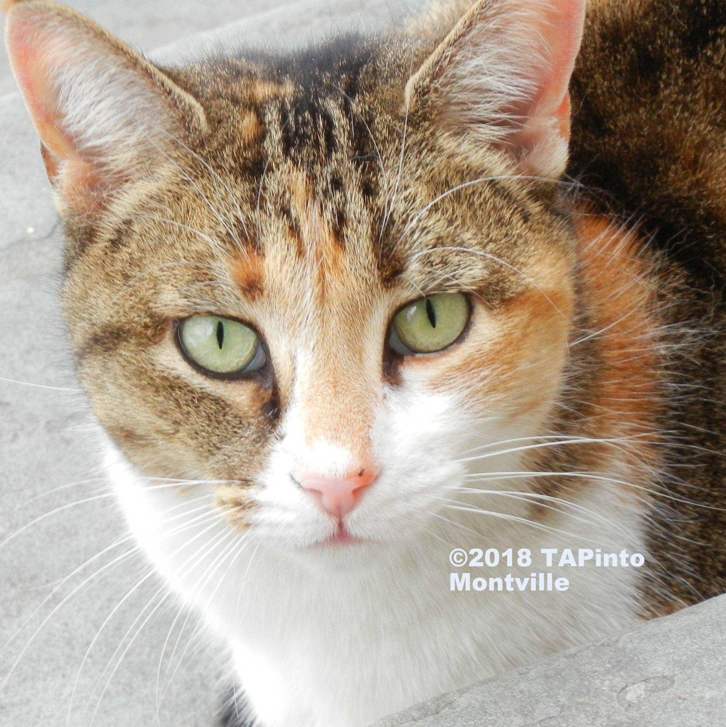 cat watermark ©2018 TAPinto Montville.JPG