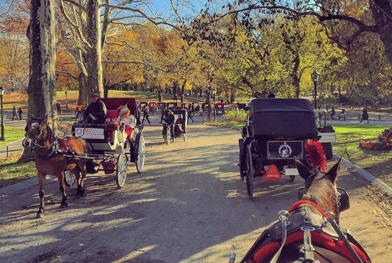 carriage horses.JPG