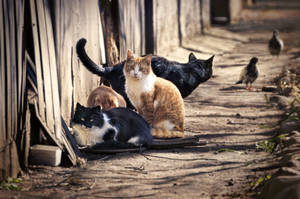 Ask A Veterinary Team: All About Community Cats