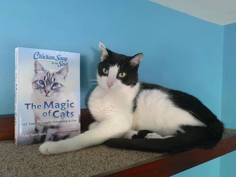 Top story 47fda14946222728b96c calvin t katz the magic of cats book susan c. willett