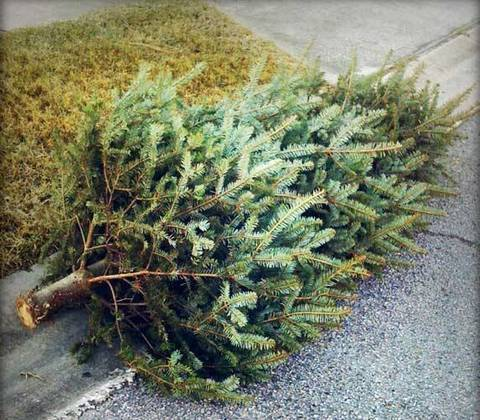 christmas tree collection.jpg