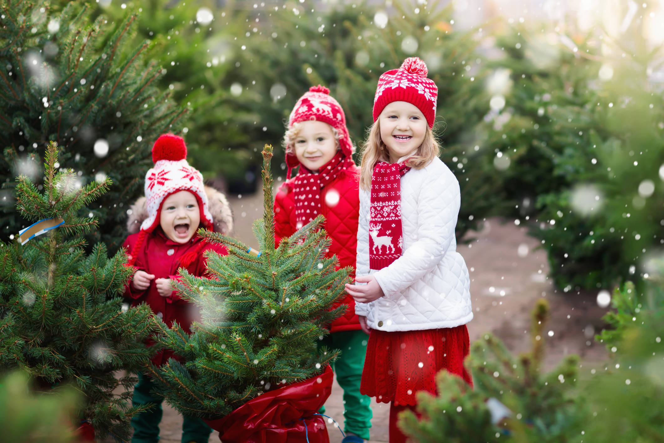 5 Terrific Cut-Your-Own Christmas Tree Farms in Northern NJ | TAPinto