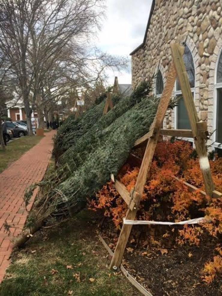 Christmas trees for sale
