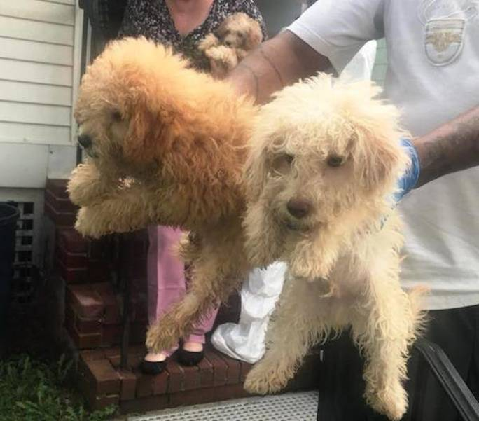Over Fifty Animals Rescued in Two Elizabeth Animal Cruelty