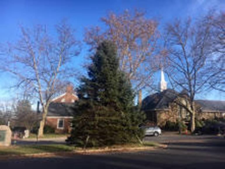 Basking Ridge Christmas Tree