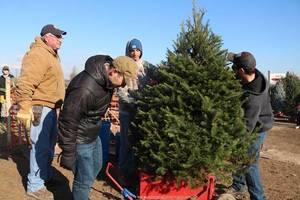 Carousel_image_290207f55a48662f35f1_christmas_tree