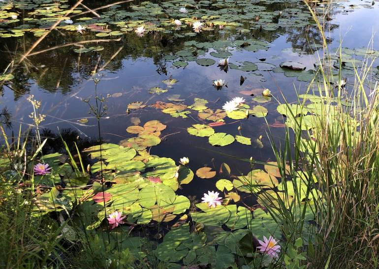 Cloverdale lilies 3.JPG
