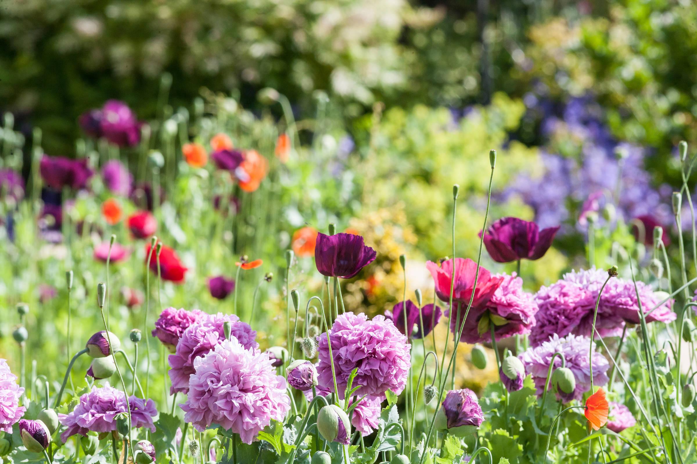 Cottage Style Garden.jpg