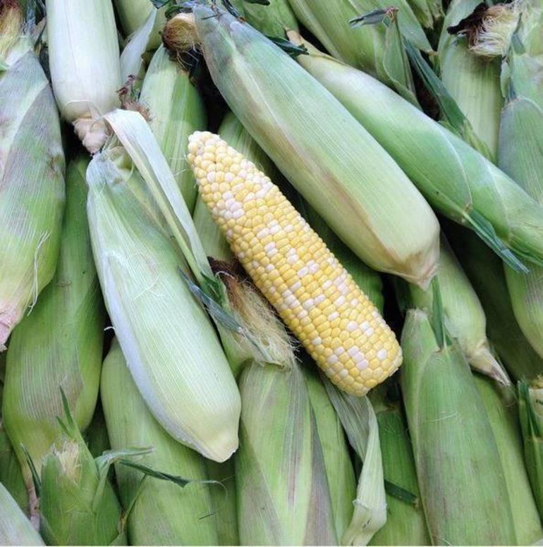 corn b b.JPG