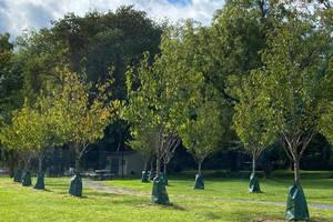 Carousel image c375327ea1a26c95a289 covid trees