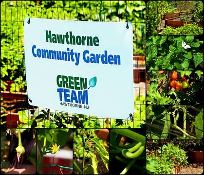 Top story 25d384930177e7645b9c community garden