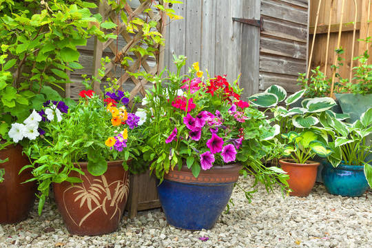 Top story 37c54e1491a8ad501322 container gardening