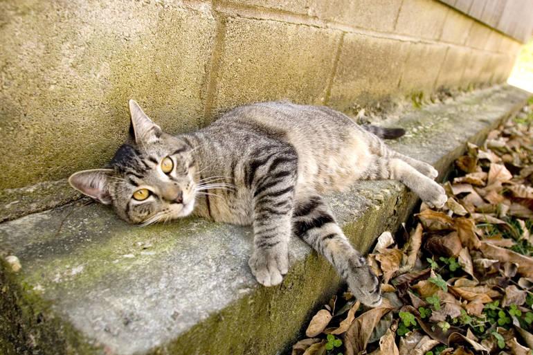 CPAW Feral Cat.JPG