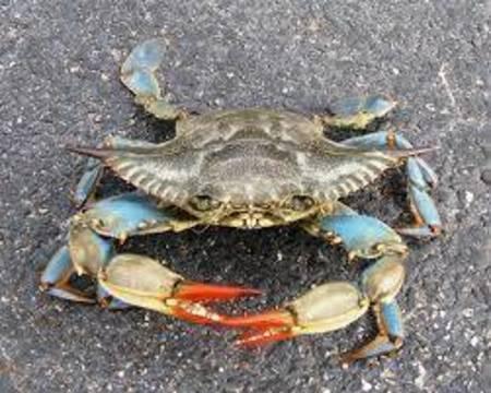 Top story e682c5728de04374429d crab