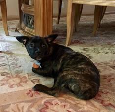 Boulevard Veterinary Clinic Pet of the Week: Carter