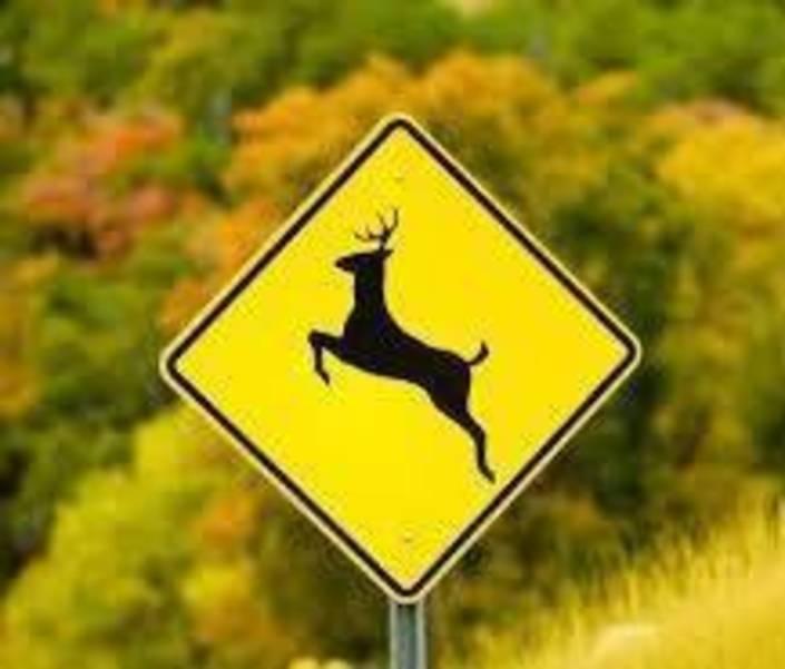 Deer-Warning-Sign.jpg