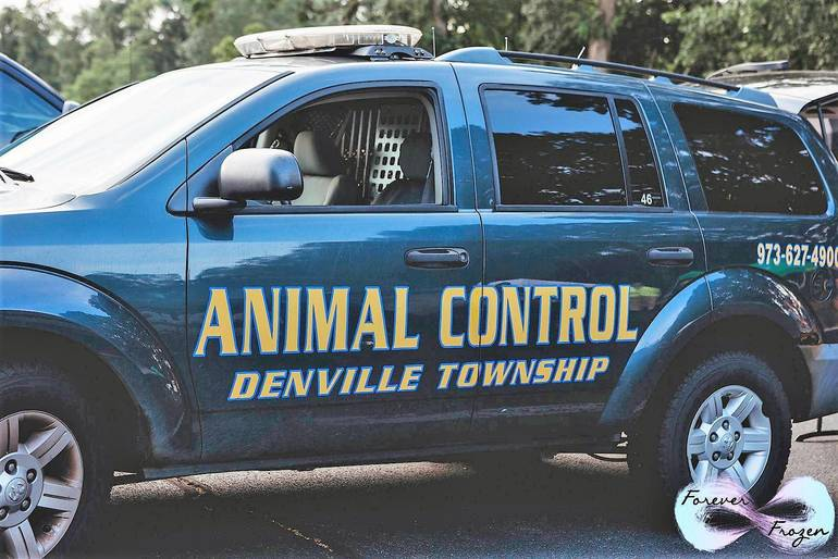 Denville National Night Out 2019 12.jpg