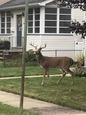 Carousel image 00f8380a59f6635ce4d6 deer lauren holic 2019 oct 9