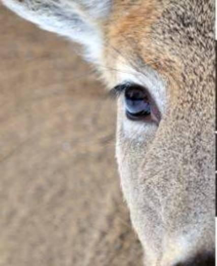 Top story da59c2e258dc713b8682 deer