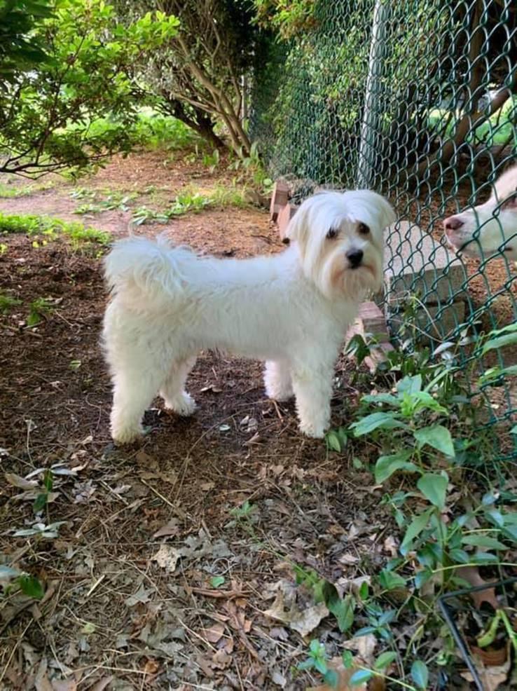 Dog Found June 9 2019 Nutley.jpg