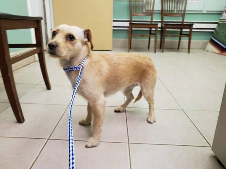 Dog Found April 12 2019 b.jpg