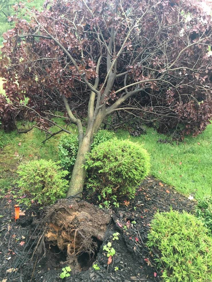 Best crop 45cdfdee7cf8e179909a downed tree