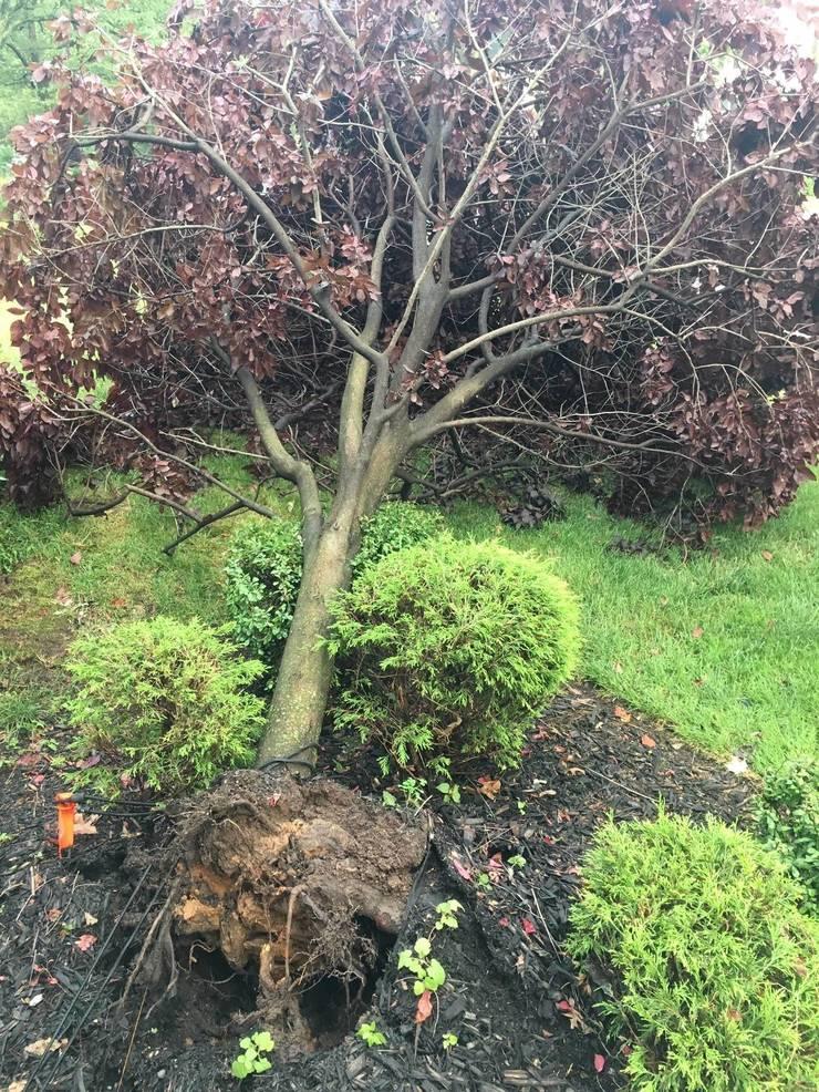 Downed tree on Helen Street in Fanwood