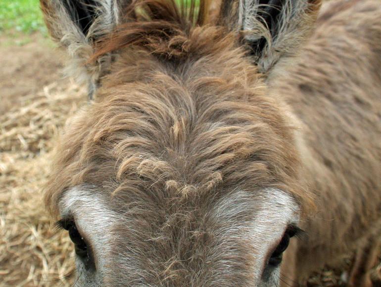 donkey face.JPG