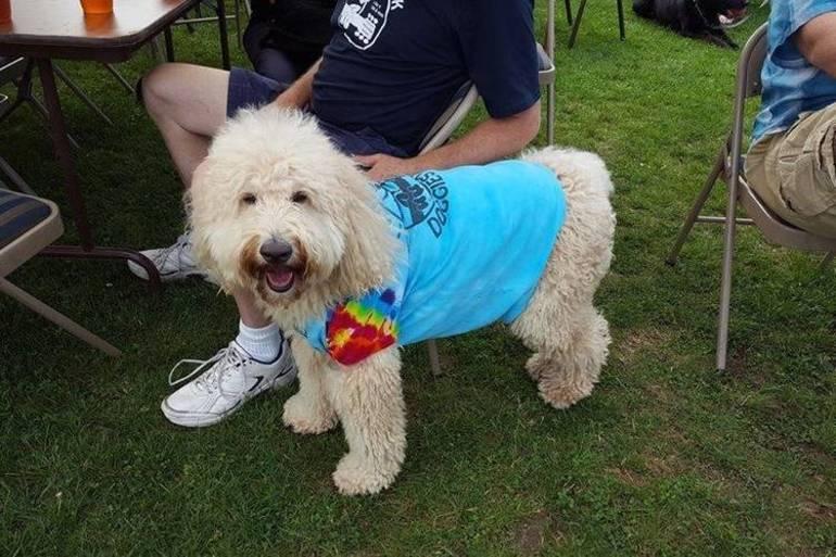 dog 2  Bring Fido.jpg
