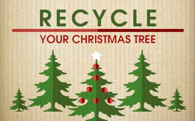 Livingston Department of Public Works to Collect and Recycle Christmas Trees in January