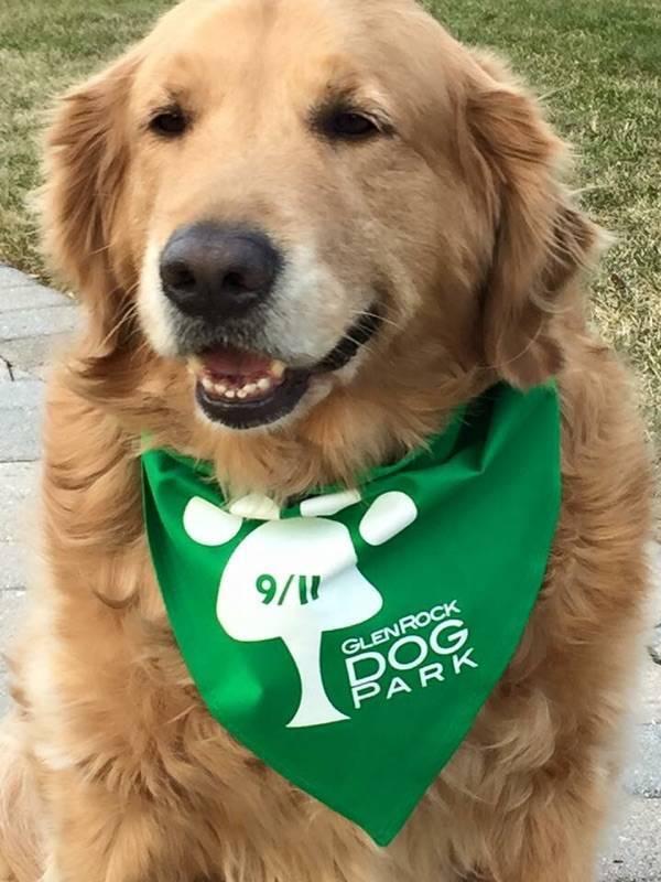 dog park doggy.jpg