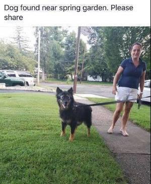 Carousel image 04a7d79eb90a45a18fc7 dog found nutley sept 18 2018