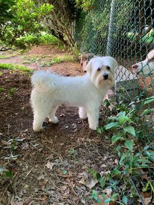Carousel image 0530f2f6f7f82bba6a73 dog found june 9 2019 nutley