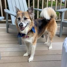 missing dog Westfield, NJ