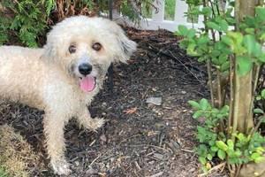 lost dog Westfield NJ