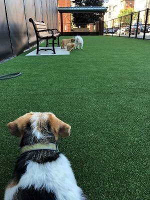 Don't Bark in the Park After Dark? Hoboken Looks at Limiting Hours for Dog Runs