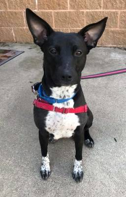 It's Lucy's Turn to Find a Home