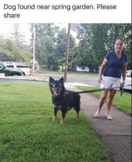 Top story 04a7d79eb90a45a18fc7 dog found nutley sept 18 2018