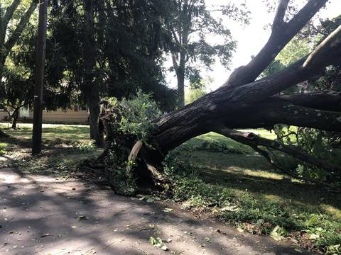 Top story c20114709c27f2a0f64f downed tree