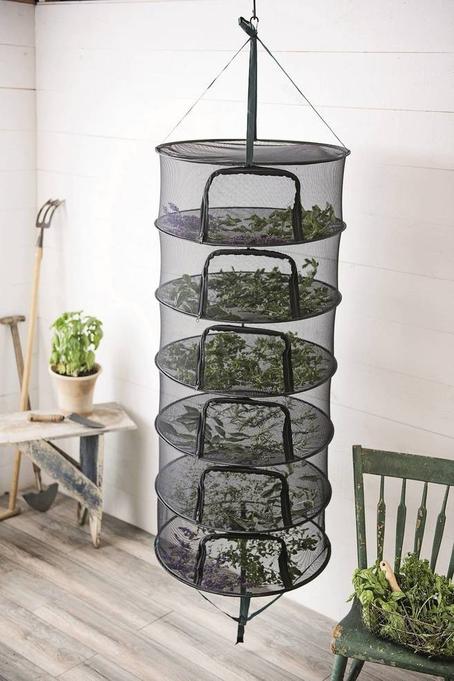 Bon Drying Is One Of The Easiest Ways To Preserve Garden Fresh Herbs.