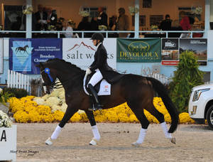 Carousel_image_4b50d977e041ae7ce218_dressage_at_devon_2017115