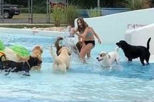 Top story 9dea72e336f9e1f731e1 drool in the pool 3