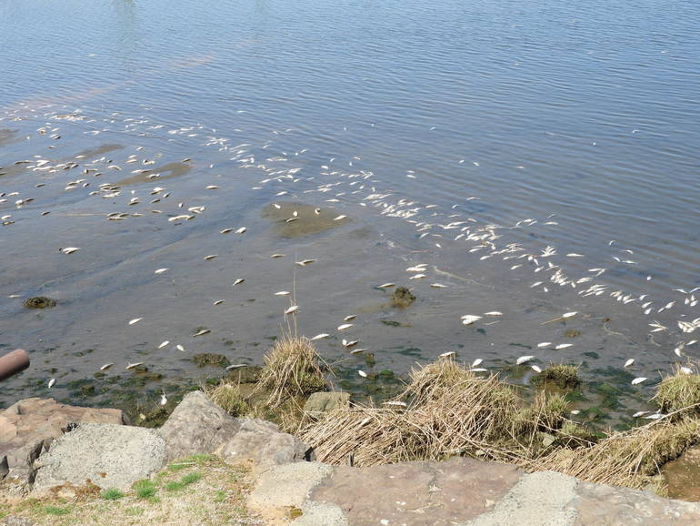 UPDATE: Red Bank Navesink Fish Kill: DEP and COA Focus on  Bacteria